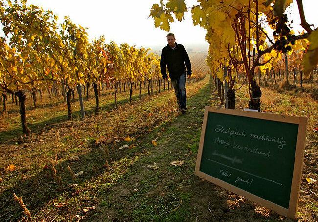 Ökologischer-Wein-W232inzerhof-Allacher